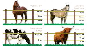 wysokość słupków dla koni i bydła